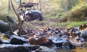 400 class deer hunt