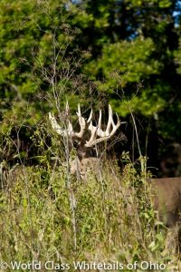 Whitetail deer hunting ranch