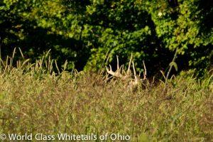 Guaranteed whitetail deer hunt