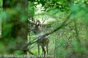 Deer farm hunt
