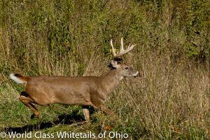 high fence Hunting Preserves