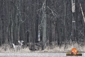 Guaranteed Deer Hunt